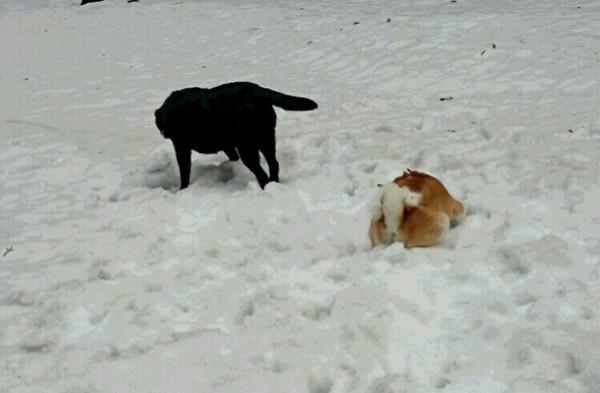 名残の雪あそび