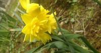 春ですね。 part 1