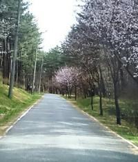 散歩 2018/04/21 17:54:54