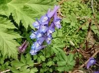 里山の春の花