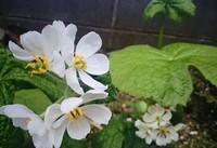 庭の花2種