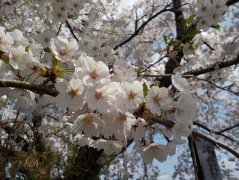 駅からハイキング 余目の史跡と桜で気分上々♪開催しました