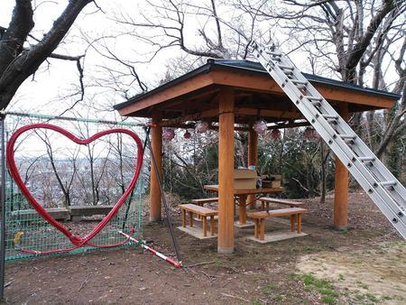 楯山公園の桜開花状況