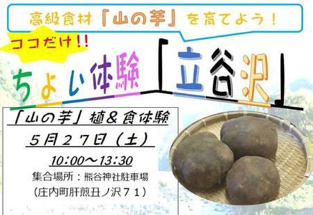 山の芋植&食体験開催♬