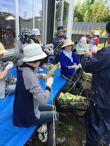掘って!編んで!食べて!カラトリ芋で秋満喫ツアー 開催しました