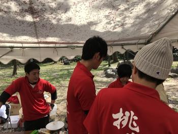 楯山公園桜まつり2018
