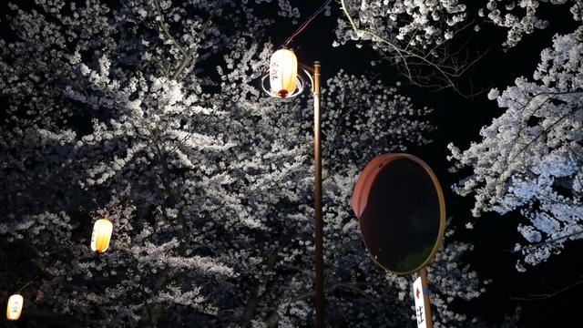 花見ツーリング