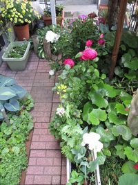 薔薇と葡萄と猫