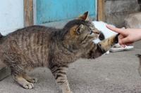 可愛い猫と