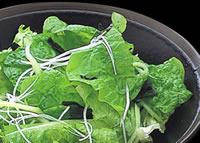 グリーンサラダ:米沢牛炭火焼肉さか野商品案内
