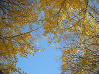 秋、最高!