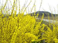 韓国の春は…