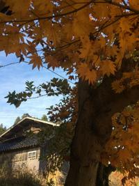 【温海ポタリング】行く秋を惜しむ気持ちと冬の到来を感じた休日