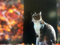 【可愛すぎてキュン死は避けられない】岩合光昭の世界ネコ歩き