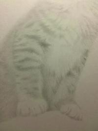 【鉛筆画 8作目】柔らかい猫毛って・・・