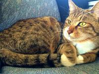 【猫の豆助】仔猫だった豆助大きく成長しておりました