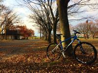 【近所ポタリング】落ち葉のジュータンが綺麗でした