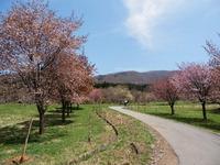 西蔵王放牧場:春