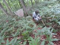 真室川町のブナ・ナラ豊凶調査(8/24)の際に見られた植物です。 【山形県環境科学研究センター】