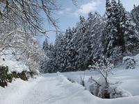 里山だより(雪の下で じーっと)
