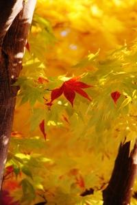 秋色あそび