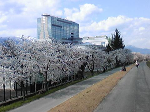 さくら大橋(長井大橋)