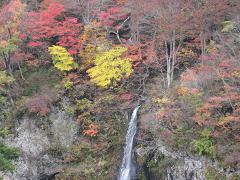 米の粉ドライブインの紅葉