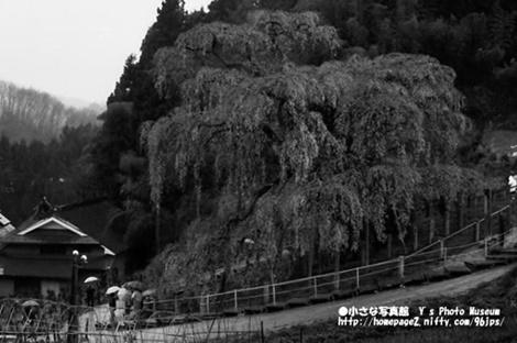 三春駒・純米吟醸三春駒・福島・三春町・滝桜