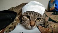 看護師のトムくん ♪