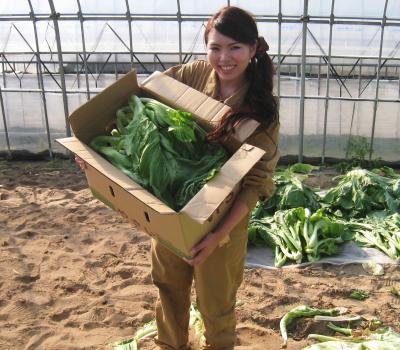 青菜せいさい収穫_001