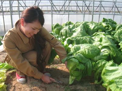 青菜せいさい収穫_006