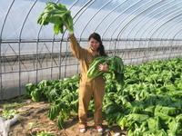 山形名物お漬物の青菜(せいさい)を収穫~♪パートⅡ