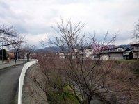 ☆桜、咲いてました!☆