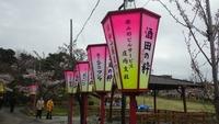 満開を迎えた日和山の桜